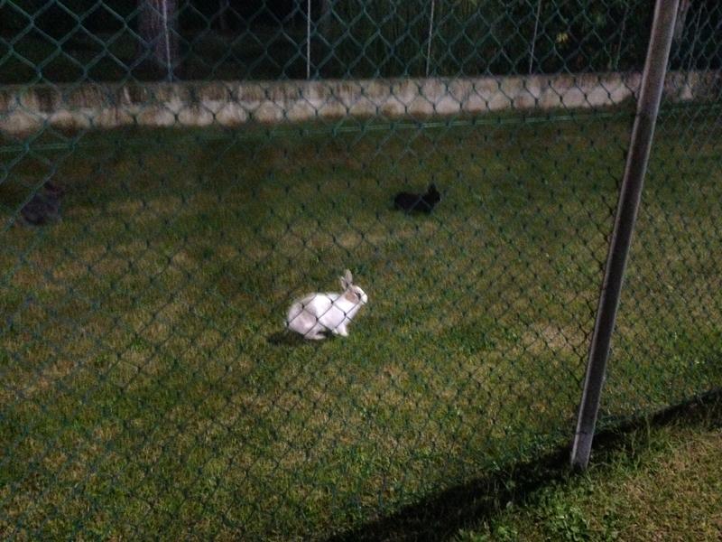 Campo Boschetto con.......conigli